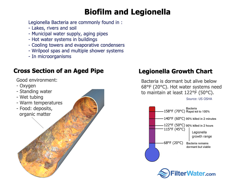 Legionella, a Detailed Overview and Guide to Prevention in