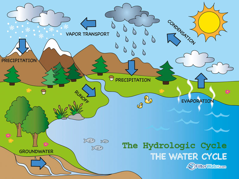 The Water Hydrologic Cycle