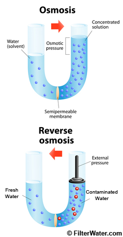 Regular and Reverse Osmosis Operating Principle